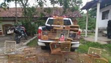 Suspeito de tráfico de animais é preso na Grande JP com 75 aves silvestres