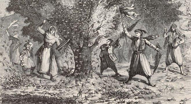Os gafanhotos são uma das mais antigas pragas conhecidas pelos homens e são mencionados na Bíblia e no Alcorão