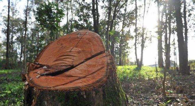 Prefeitura retirou árvores que corriam o risco de queda no parque Crédito: Alina Souza