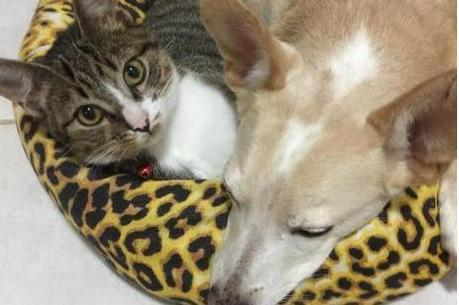 Davi agora tem uma irmã canina, a Valentina, e uma mãe protetora que oferece todo o suporte para que ele tenha qualidade de vida