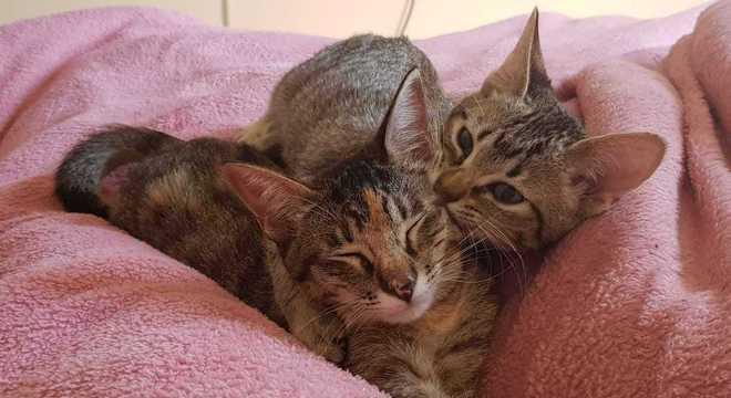 O tempo ajudou os dois filhotes a se adaptarem ao convívio familiar
