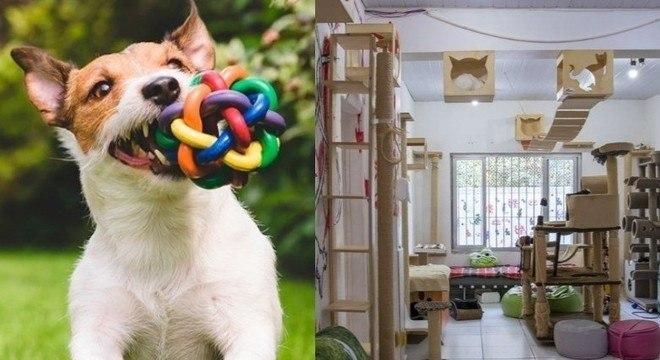 Enriquecimento ambiental é benéfico para a saúde física e mental de cães e gatos