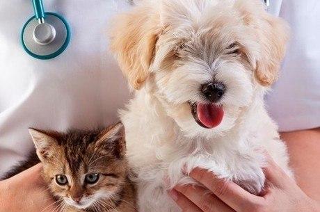 Medicina veterinária do coletivo pode trazer mais dignidade para todos os animais