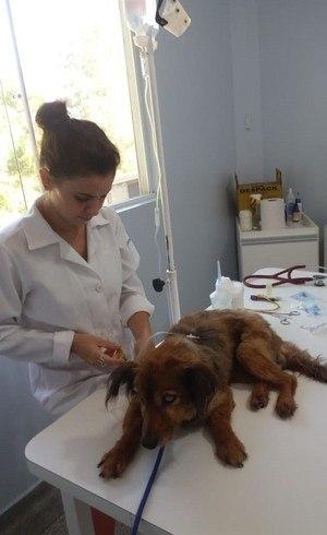 No Projeto Segunda Chance, os animais resgatados são sempre encaminhados para avaliação de um médico-veterinário