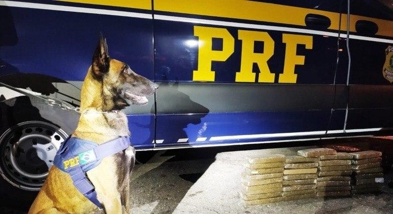 Suspeito foi preso em flagrante após tentar transportar maconha para Vitória (ES)
