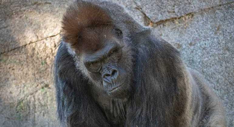 Oito macacos do zoológico foram infectados