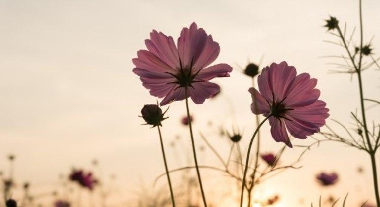 Estação do ano conhecida pelo desabrochar das flores terá início nesta quarta-feira (22)