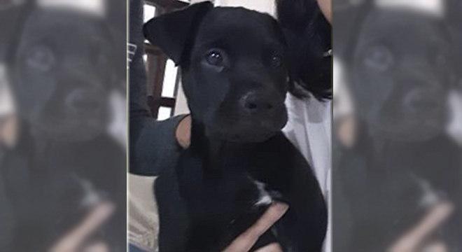Odin é um filhote de 5 meses que desapareceu em Osasco (SP)