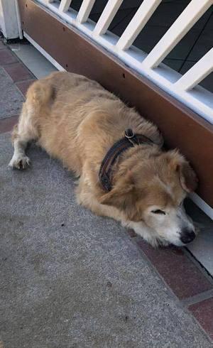 Cachorra é resgatada na rua