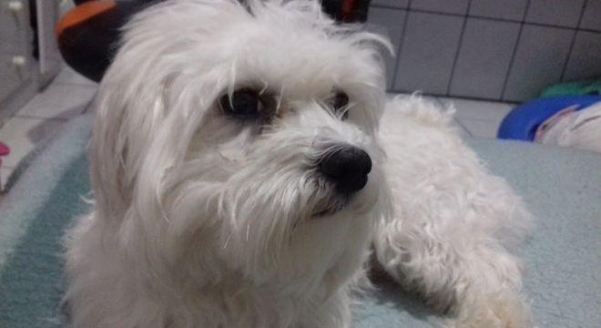 Ralph está desaparecido na Cidade Líder, em São Paulo (SP)