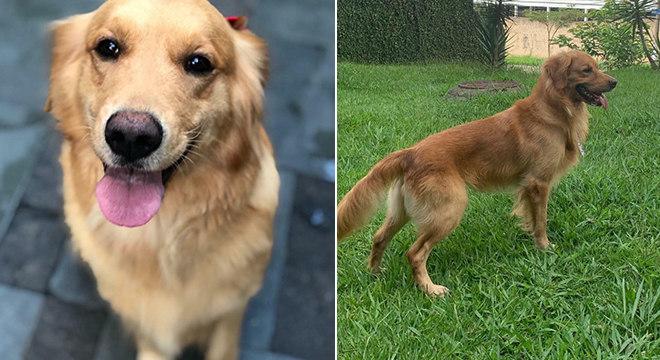 Maya e Balu estão desaparecidos no Jardim Esther, em São Paulo
