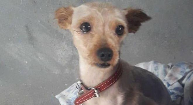 O animal desapareceu na zona leste São Paulo