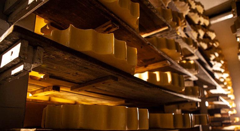 Produção de queijos premiados em MG