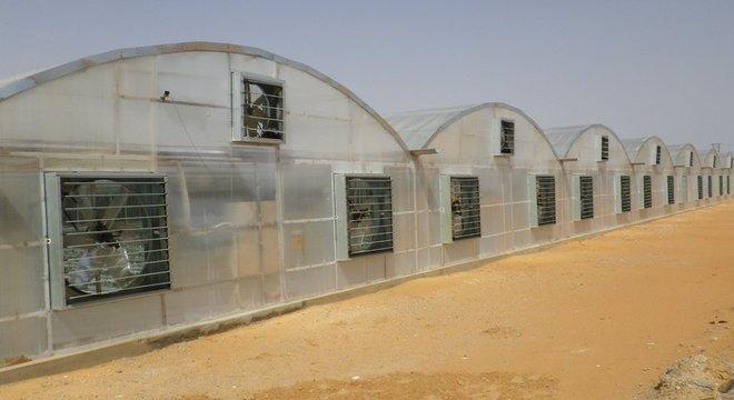 Mebiol Tecnologia japonesa permite produção de tomate no meio do deserto, como este em Dubai