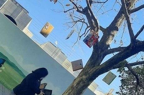 Professora cria árvore de livros