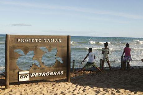 Projeto Tamar comemora proteção a tartarugas
