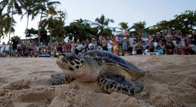 Projeto Tamar é responsável pela preservação das tartarugas no litoral brasileiro