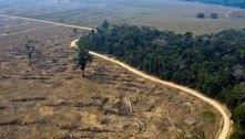 ONU aponta que proteção de áreas naturais avançou nos últimos anos