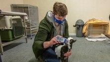Pub irlandês vira clínica de animais selvagens durante a pandemia
