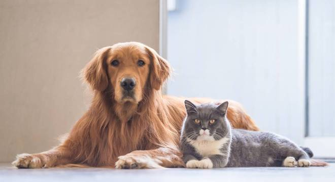 Pulgas e carrapatos: conheça os perigos para a saúde do seu pet