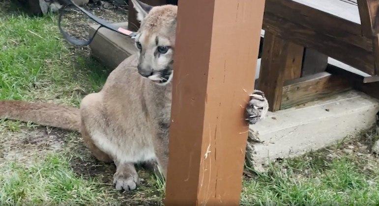 Animal de 11 meses é apelidado de Sasha