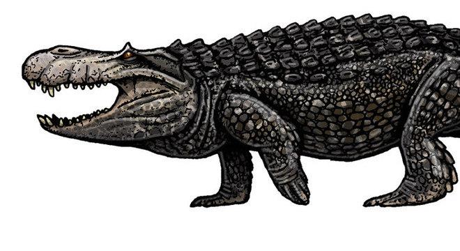 Purussaurus brasiliensis foi o maior jacaré que já existiu