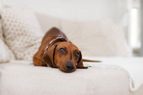 O animal entediado pode aprontar dentro de casa