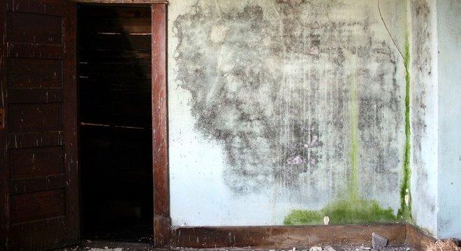 Ambientes úmidos e com pouca ventilação favorecem a transmissão da doença
