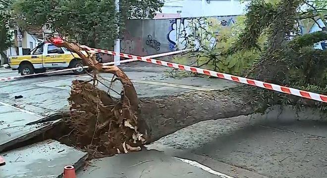 Na zona sul, árvore de grande porte interdita a via completamente