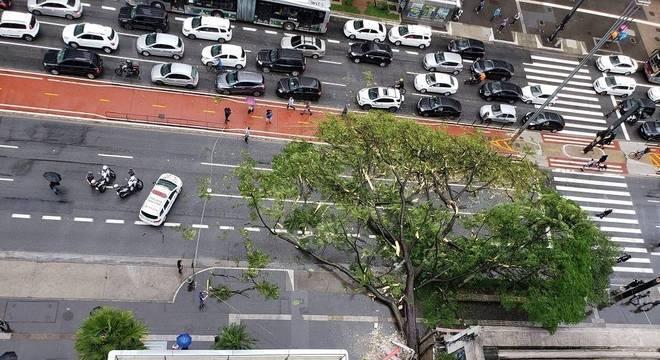 Queda de árvore atinge carro e bloqueia avenida Paulista