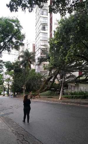 Queda de árvore na rua João Ramalho, em Perdizes
