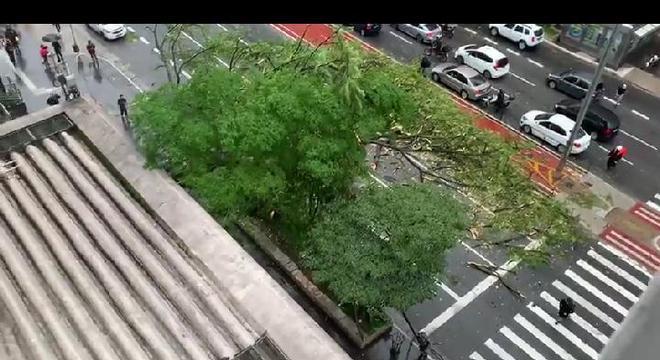 Queda de árvore deixou uma pessoa ferida
