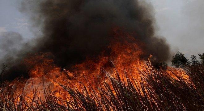 Neste ano, vários Estados da Amazônia legal tem enfrentado queimadas em florestas