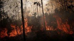 O que as queimadas na Amazônia têm a ver com a economia e por que as eras Dilma e Bolsonaro fogem à regra
