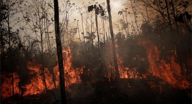 Aumento de queimada na Amazônia neste ano chamou a atenção da imprensa e de autoridades internacionais