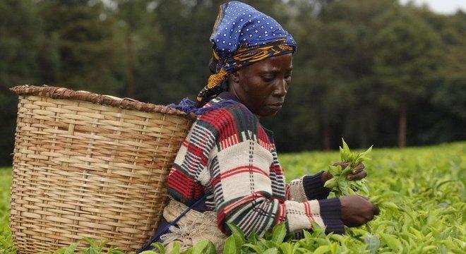 Comunidades locais no Quênia têm sistemas tradicionais de proteção ambiental