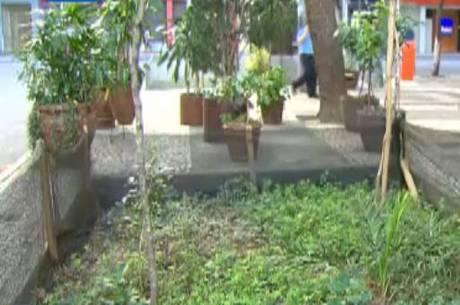 Jardim é solução para evitar alagamento na rua