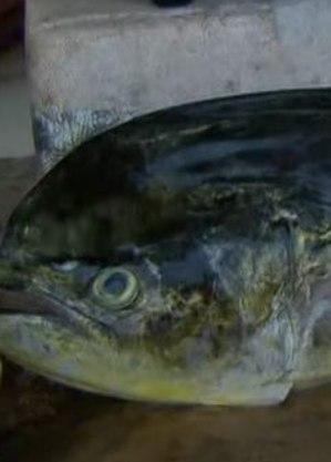 Pescadores queriam achar peixe-dourado