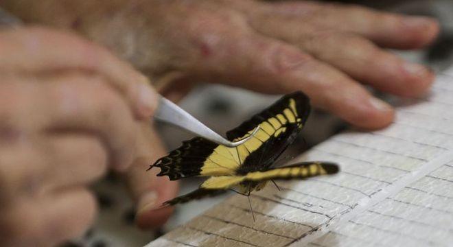 Acervo de insetos do Museu Nacional era referência no país e internacionalmente