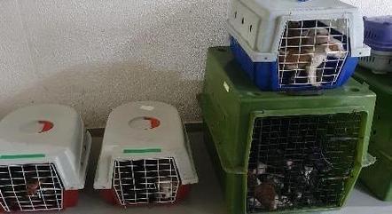 Animais estavam em condições precárias
