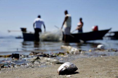 Baía e manguezais são afetadas pela poluição