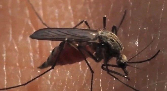 Doença transmitida pelo mosquito Aedes aegypti já matou 86 pessoas em MG