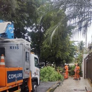 Queda de árvores interdita vias no Rio