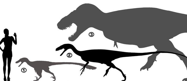 Aratasaurus é maior que velociraptor, mas menor que ser humano e Tyrannosaurus