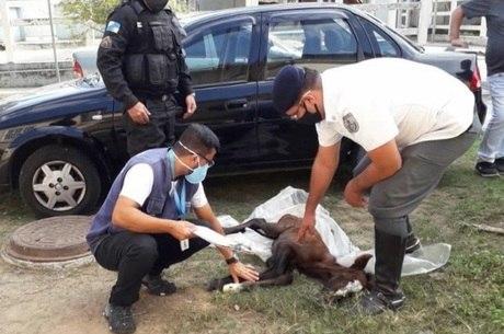 Potro foi levado para CCZ de Santa Cruz