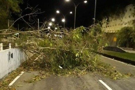 Árvore caiu em avenida da zona sul
