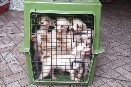 50 cães foram resgatados em estado de maus-tratos