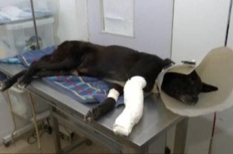 Cachorro foi encaminhado para uma clínica