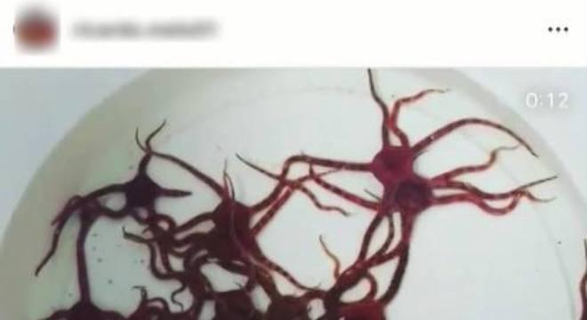 Animais retirados de corais  foram coletados no ES