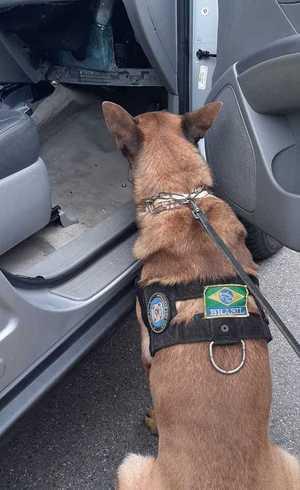 Cão achou droga em painel de veículo